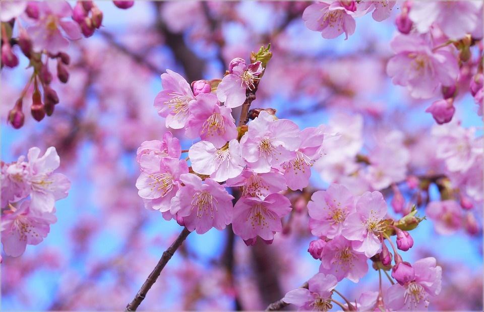 桜シーズン おススメ 出張撮影サービス どこ