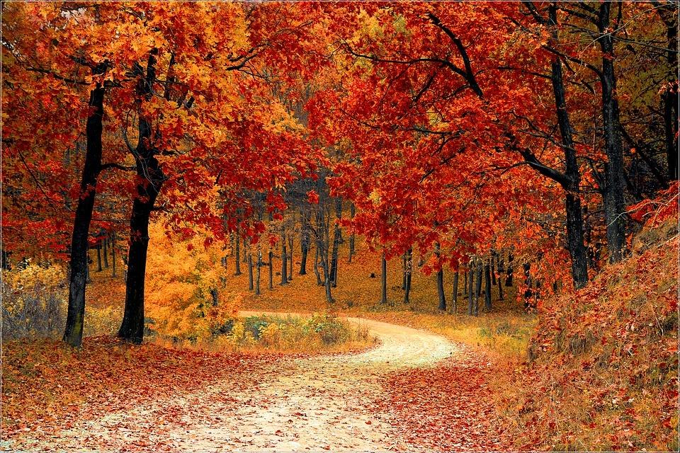 出張撮影サービスで秋におすすめ イベント 屋外 記念写真